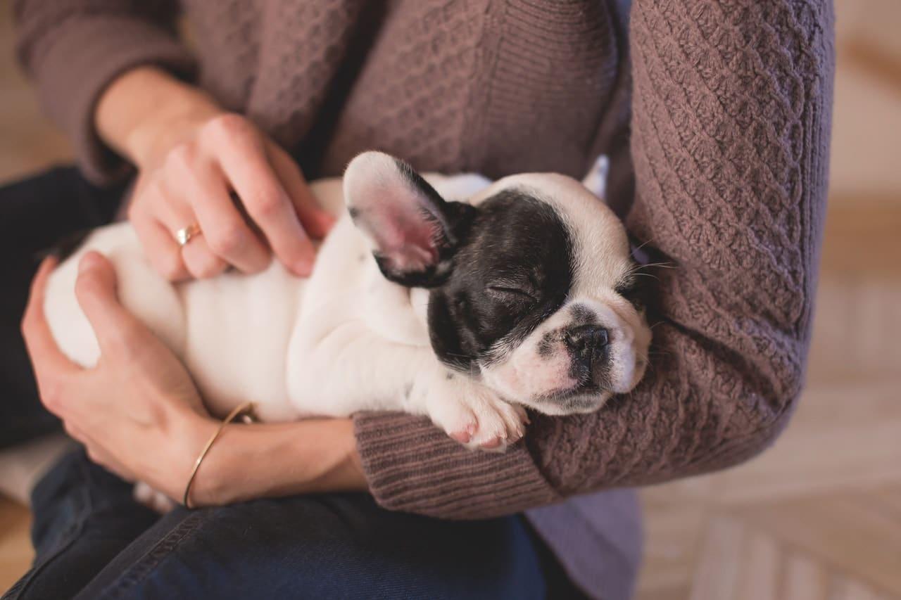 Reasons Pets Companion Article Image