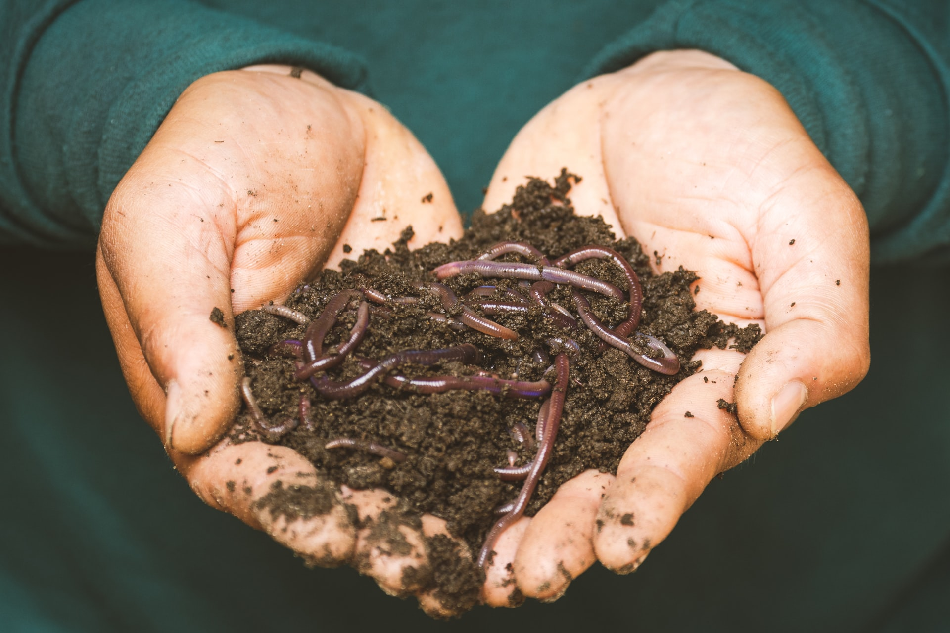 Benefits Worm Casting Header Image