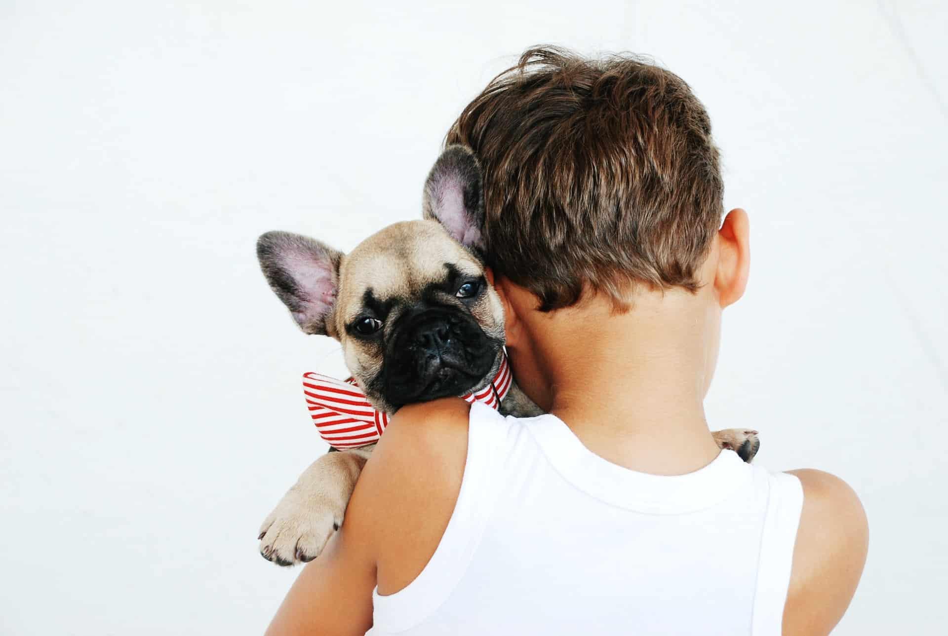 Why Get Pet Header Image