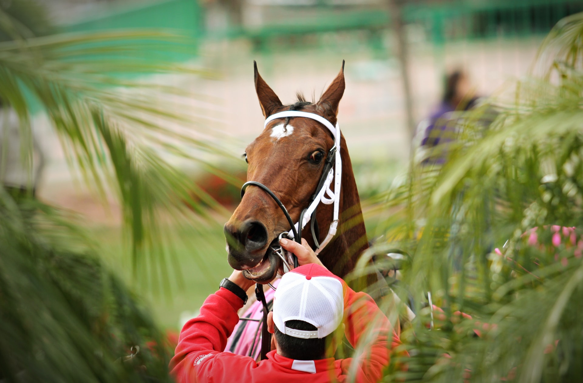 Betting tips kentucky derby sports betting lines and picks
