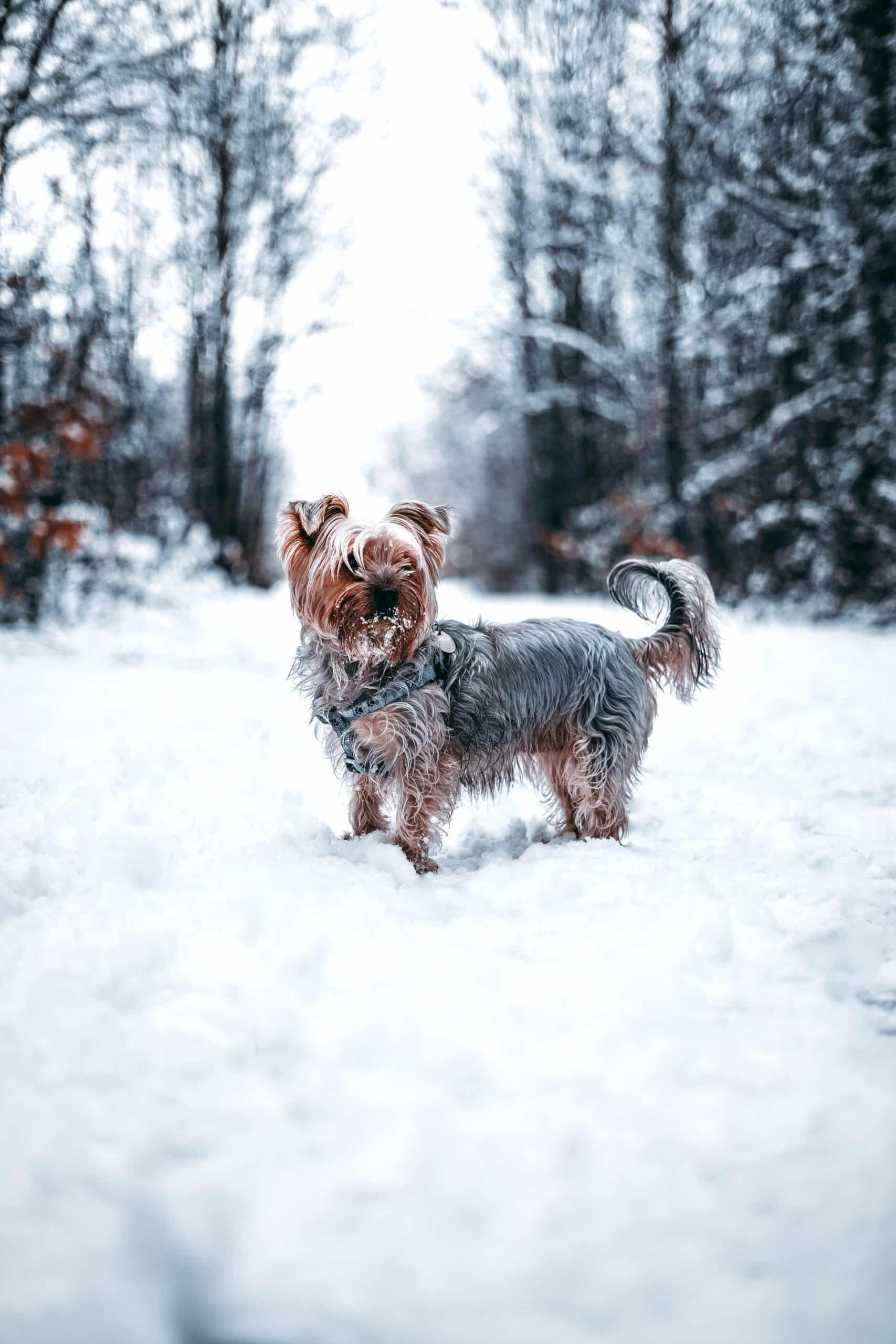 Choose Food Terrier Dog Article Image