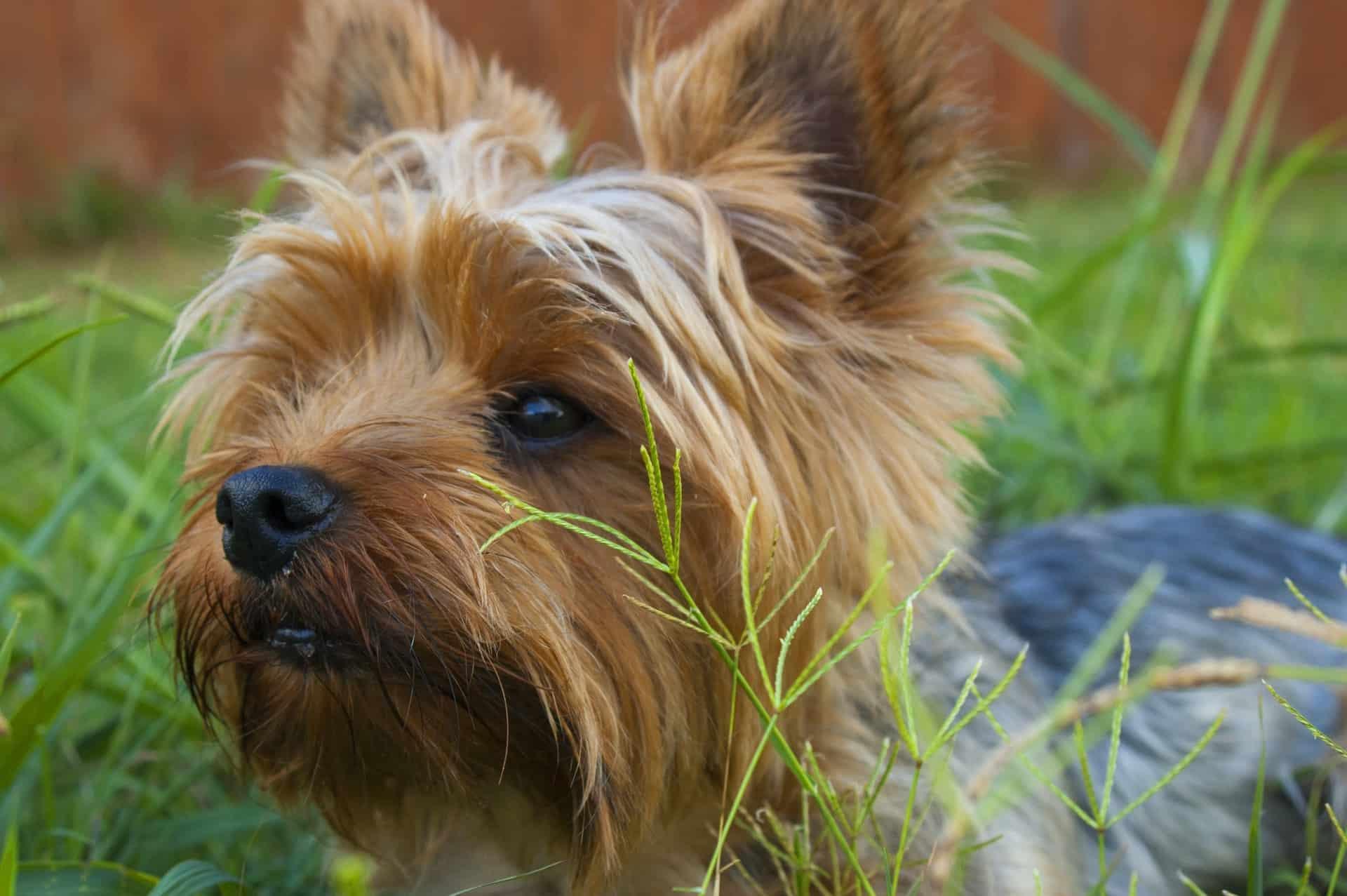 Choose Food Terrier Dog Header Image