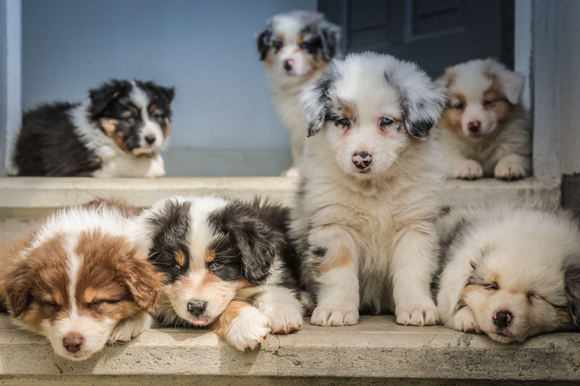 Gifts Dog Parents Header Image