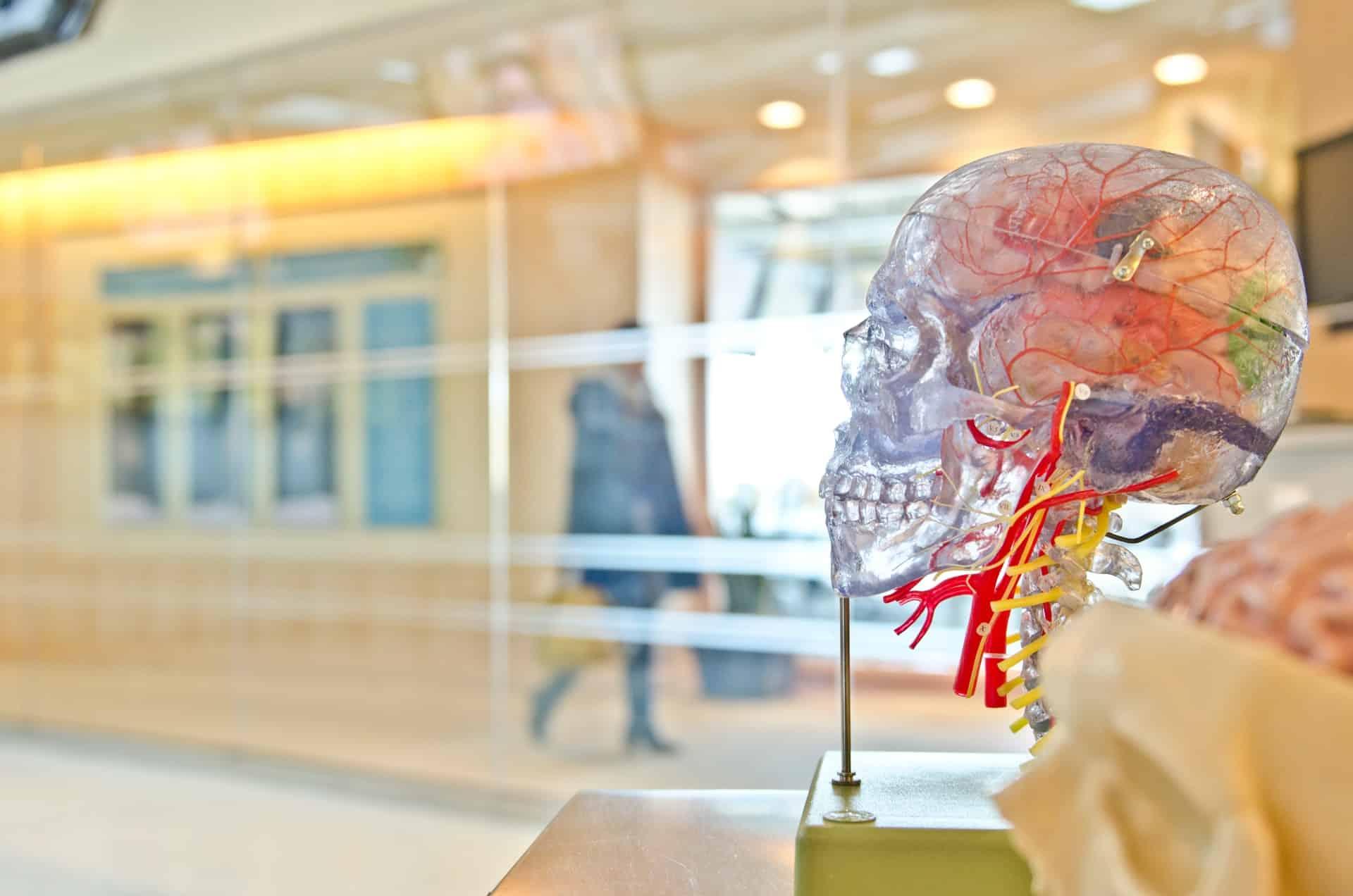 Heal Itself Brain Damage Header Image
