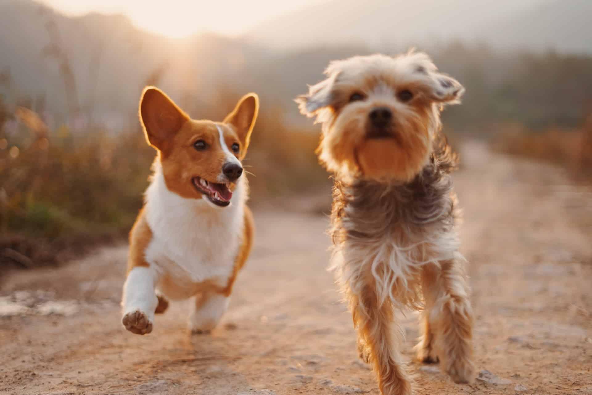 Ways Boost Dog's Immune System Header Image