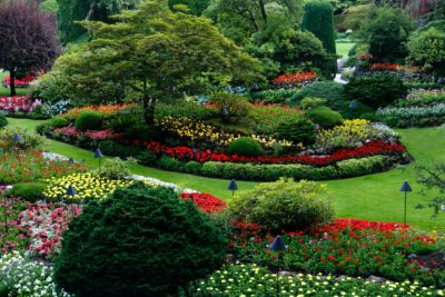 Beautiful Lawn With Right Technology Image1