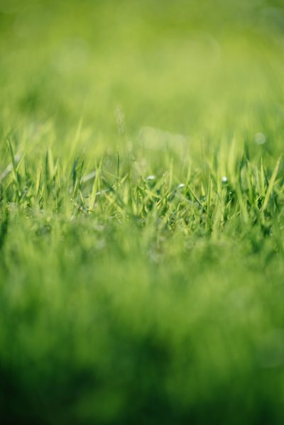 Beautiful Lawn With Right Technology Image2