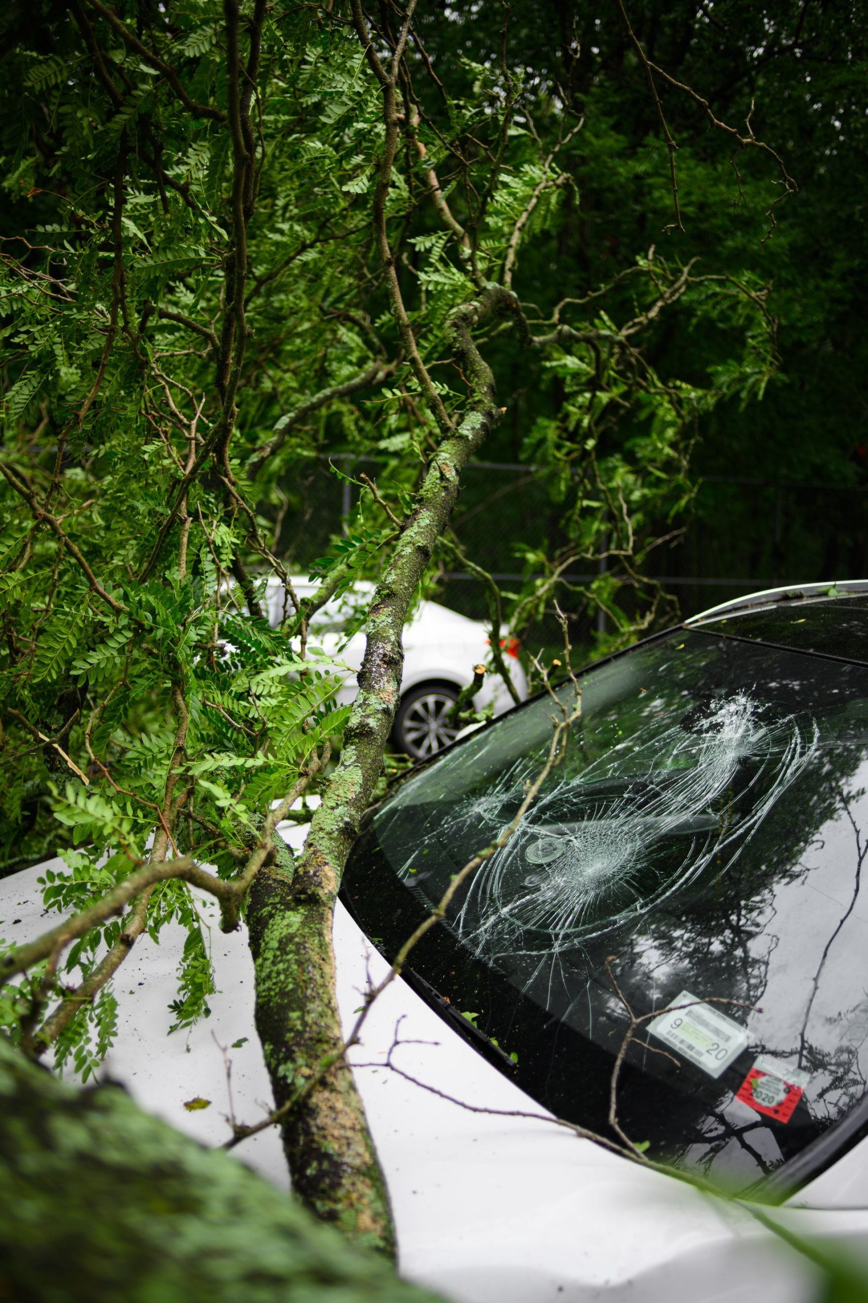 Car Accident Cases Article Image