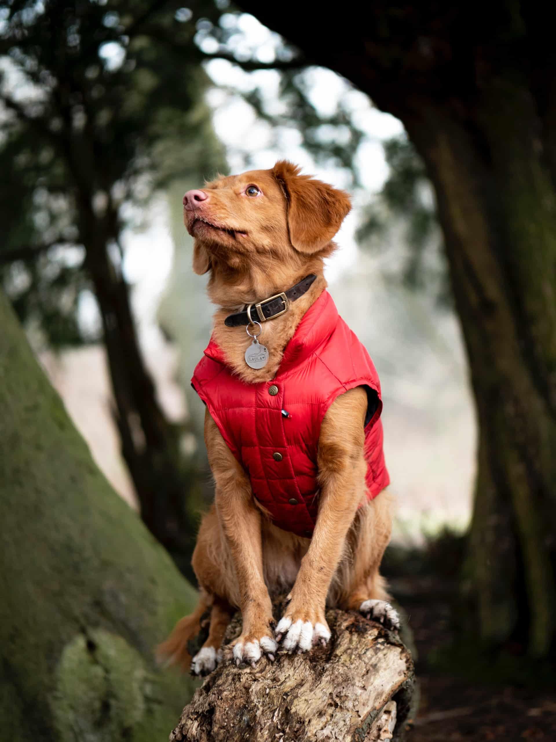 How Pet Coat Healthy Article Image