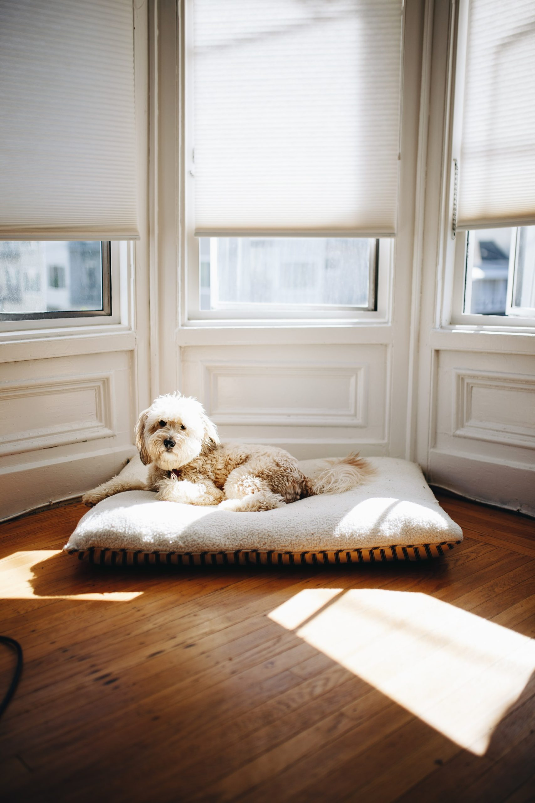 Wash Dog Bed Guide Article Image