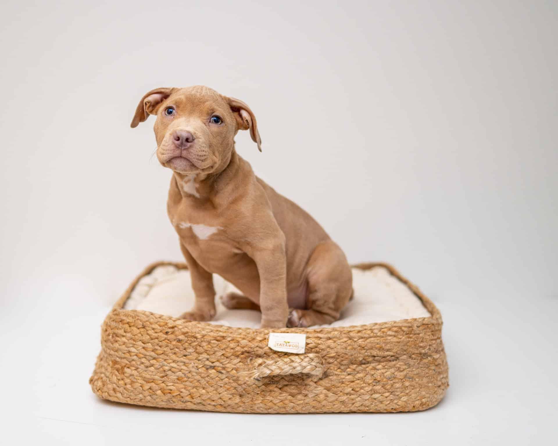 Wash Dog Bed Guide Header Image