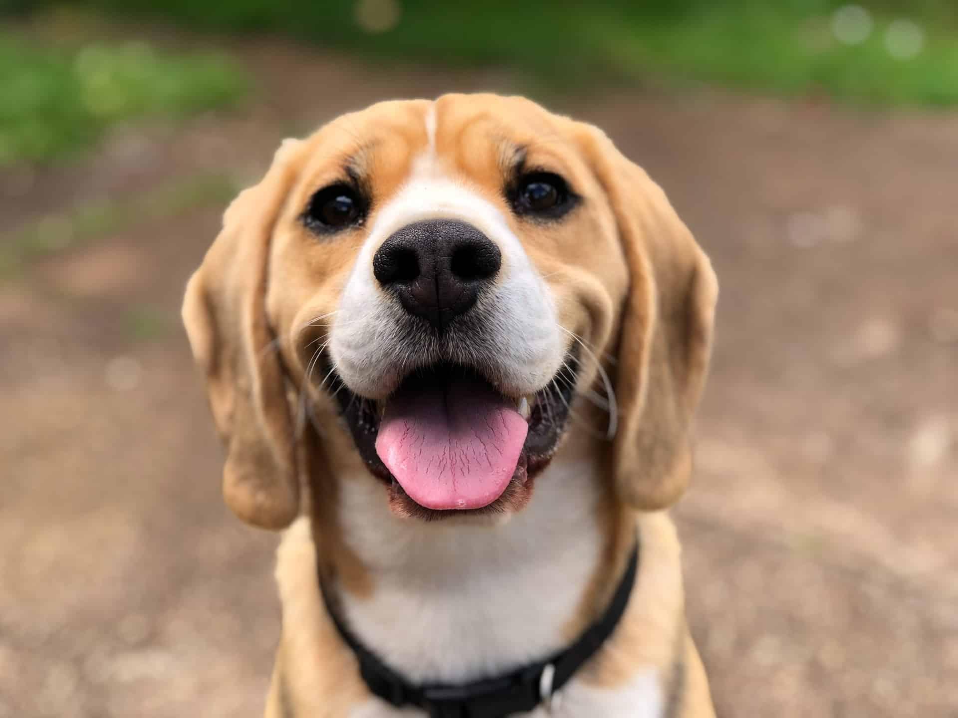 CBD Pets Guide Header Image