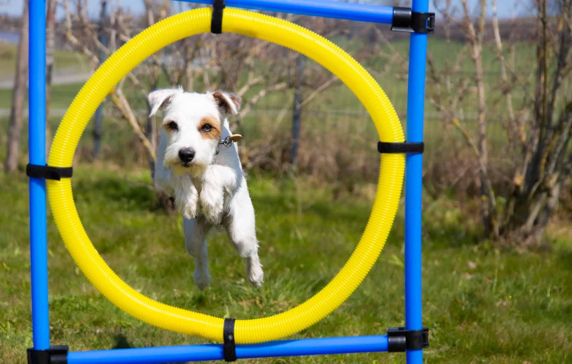 Dog Sports Guide Header Image