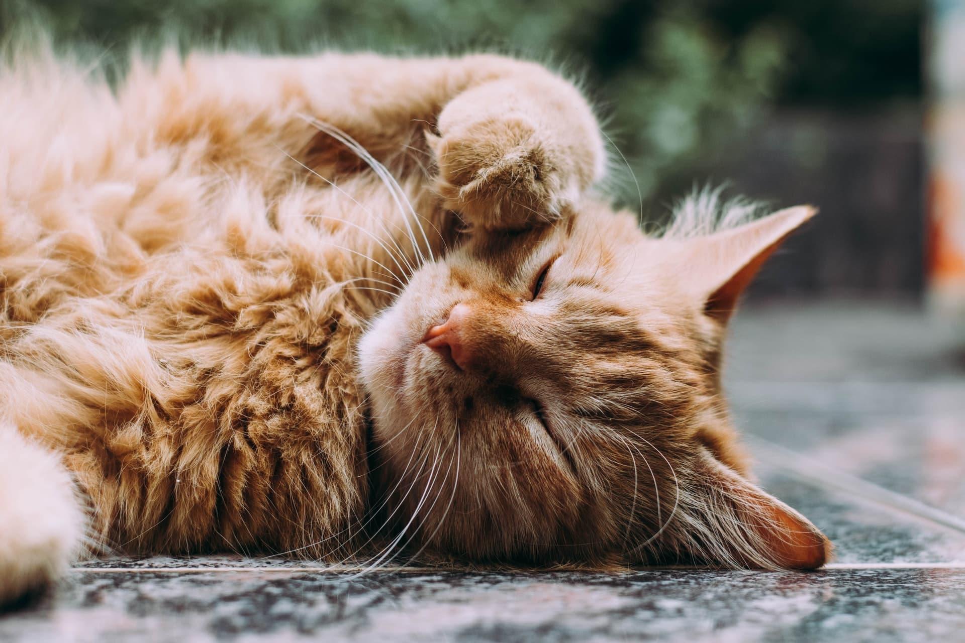 CBD Cat Treats Header Image