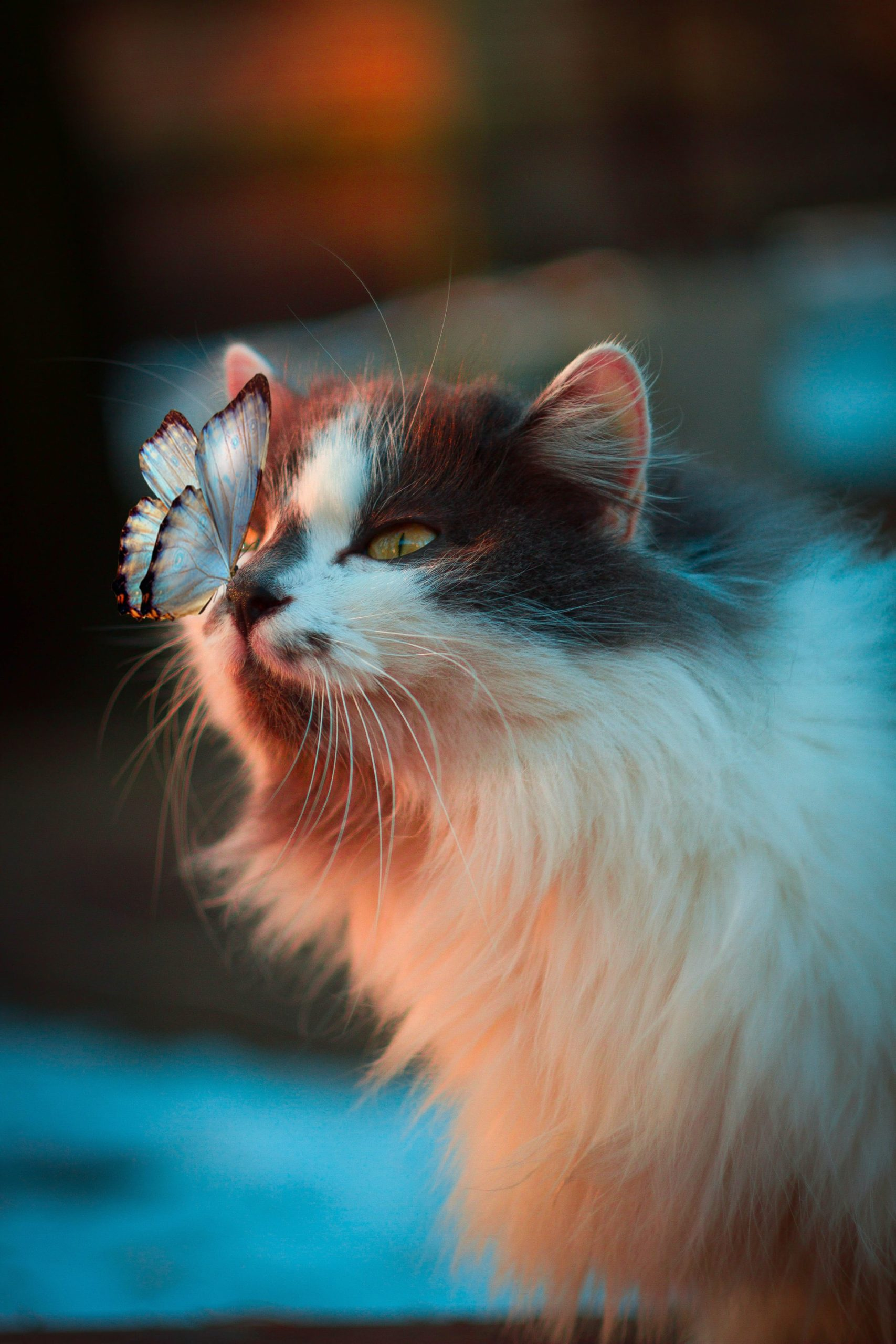 Cutest Cats Follow Article Image