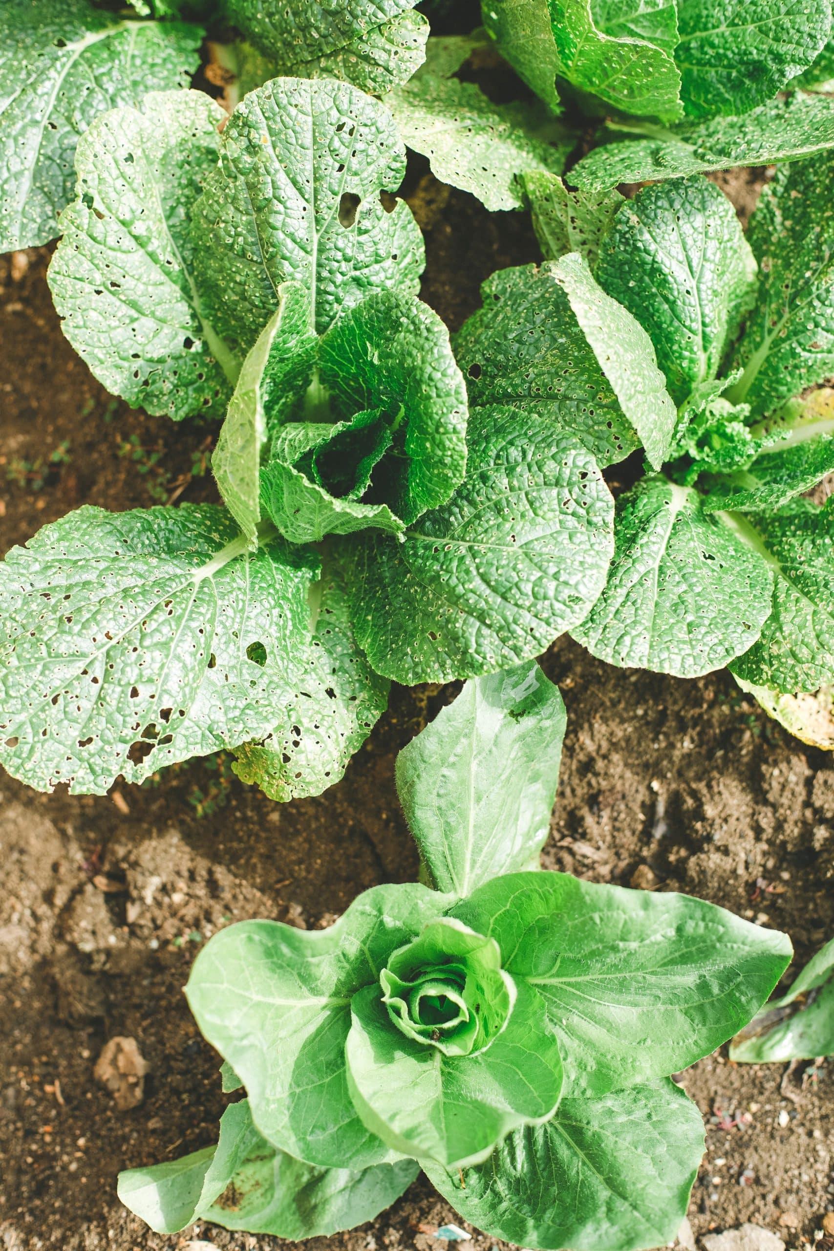 How Grown Vegetables Herbs Article Image