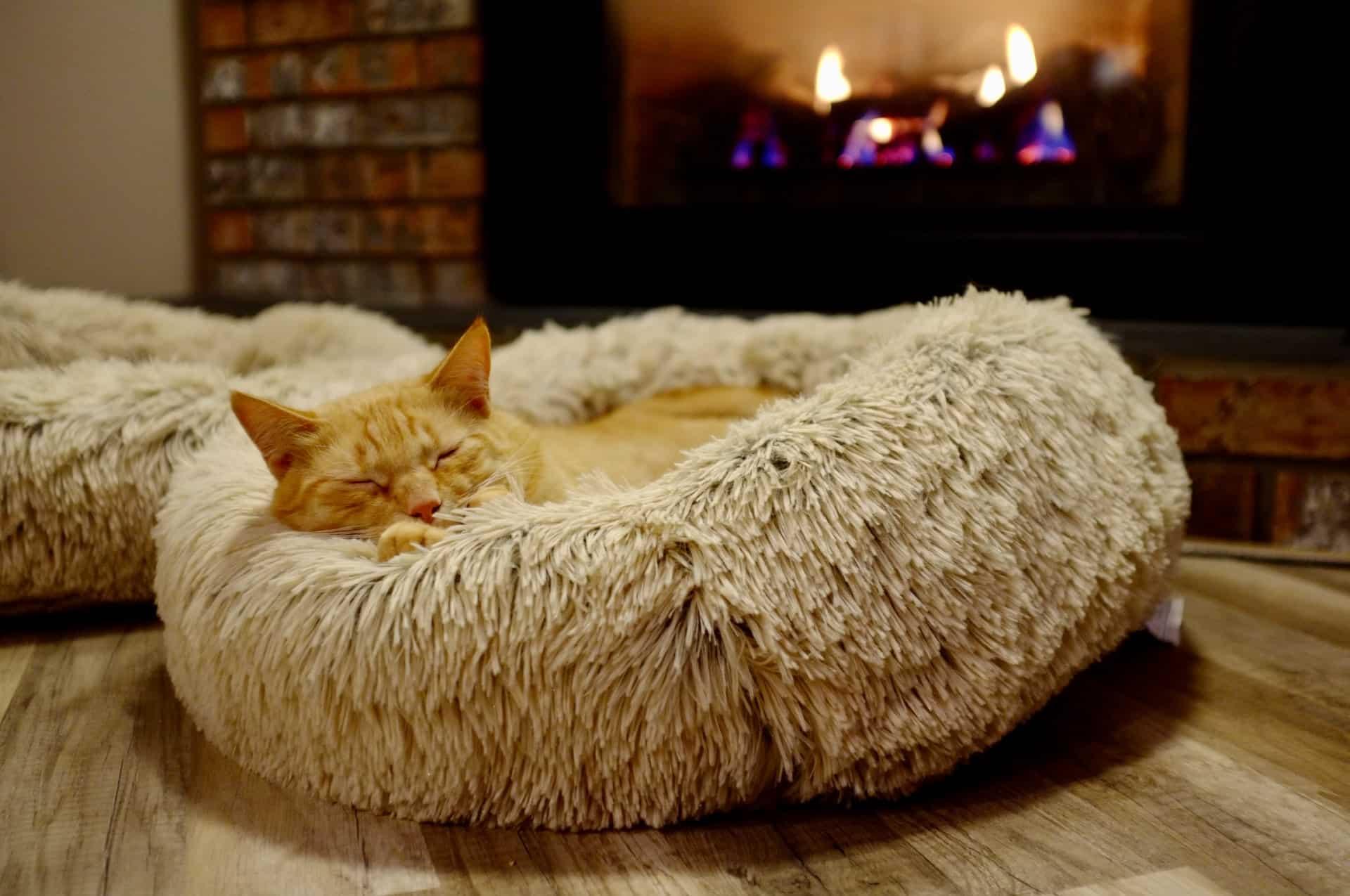 Furniture Pet Cat Header Image
