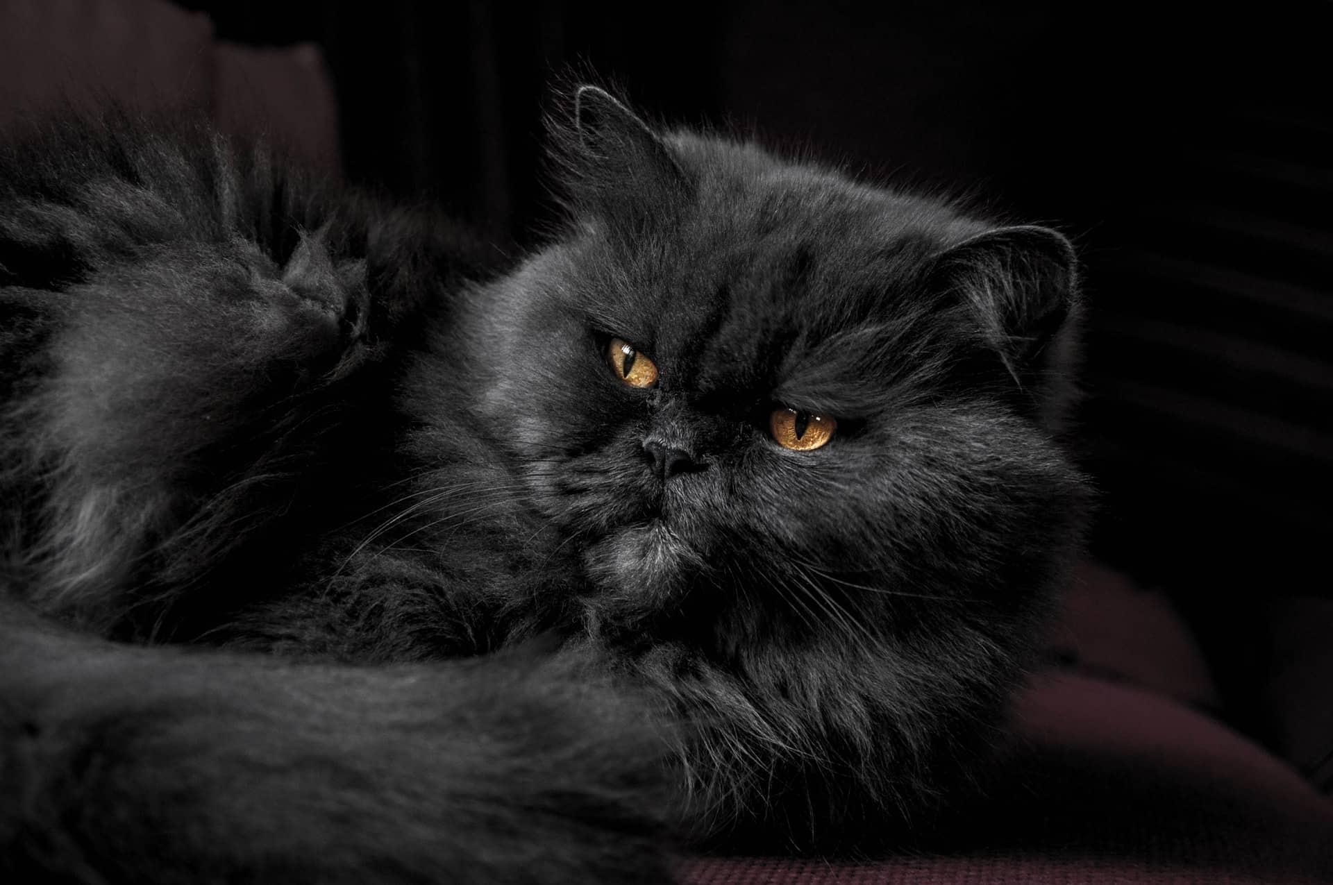 Cat Breeds Kids Article Image 7