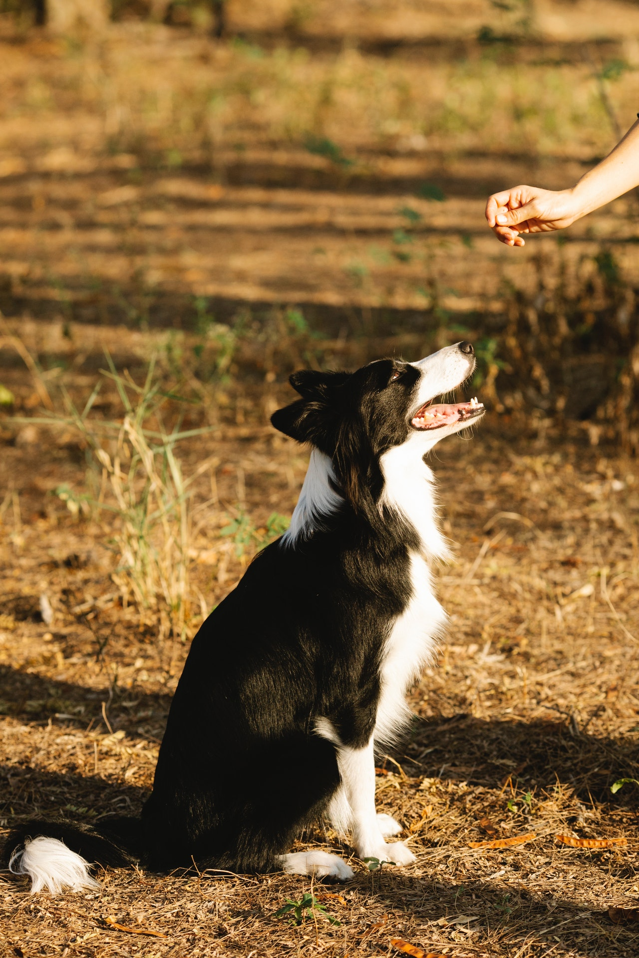 Pet Health Tips Article Image