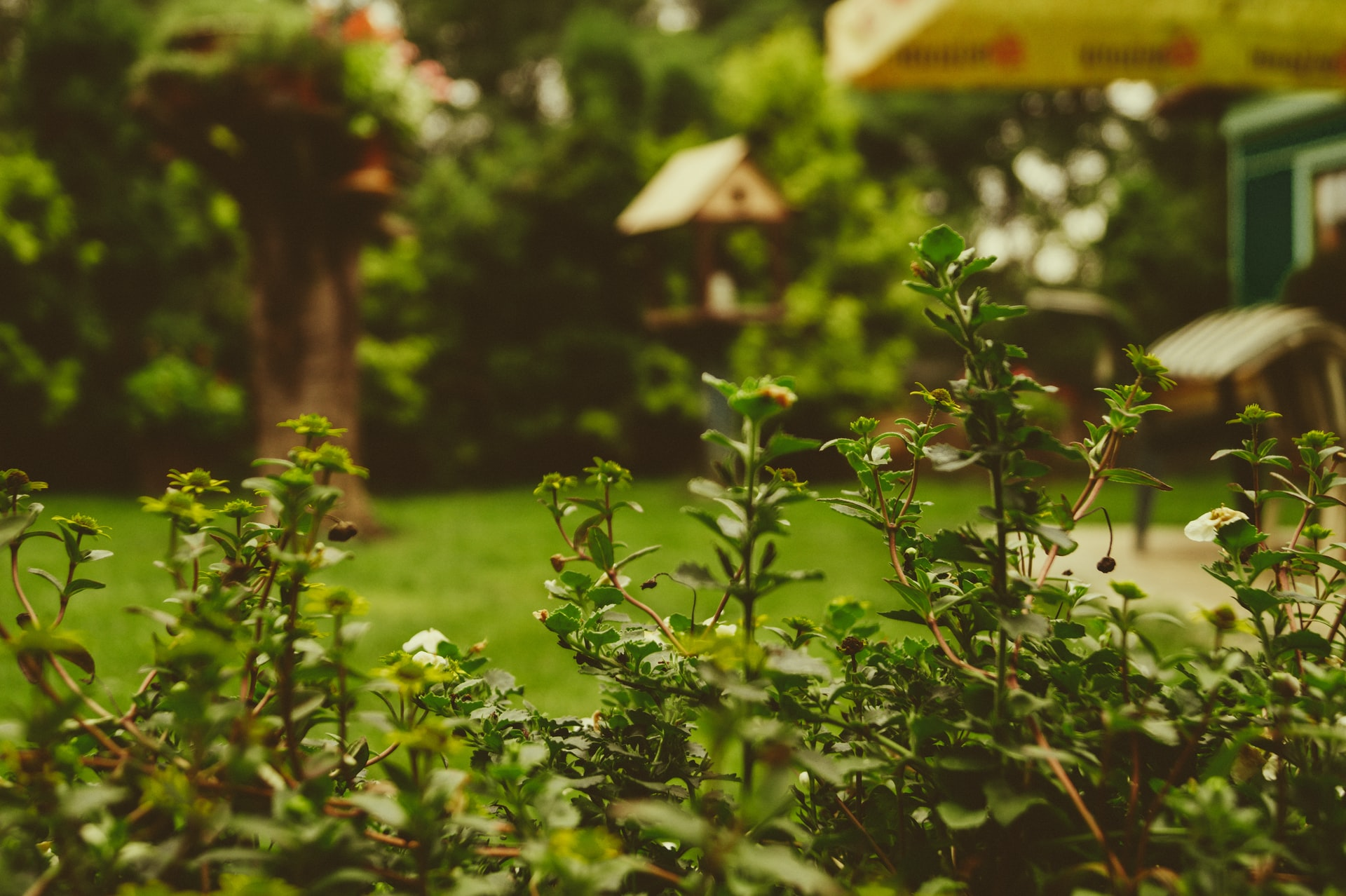 Prevent Pests Destroying Garden Header Image